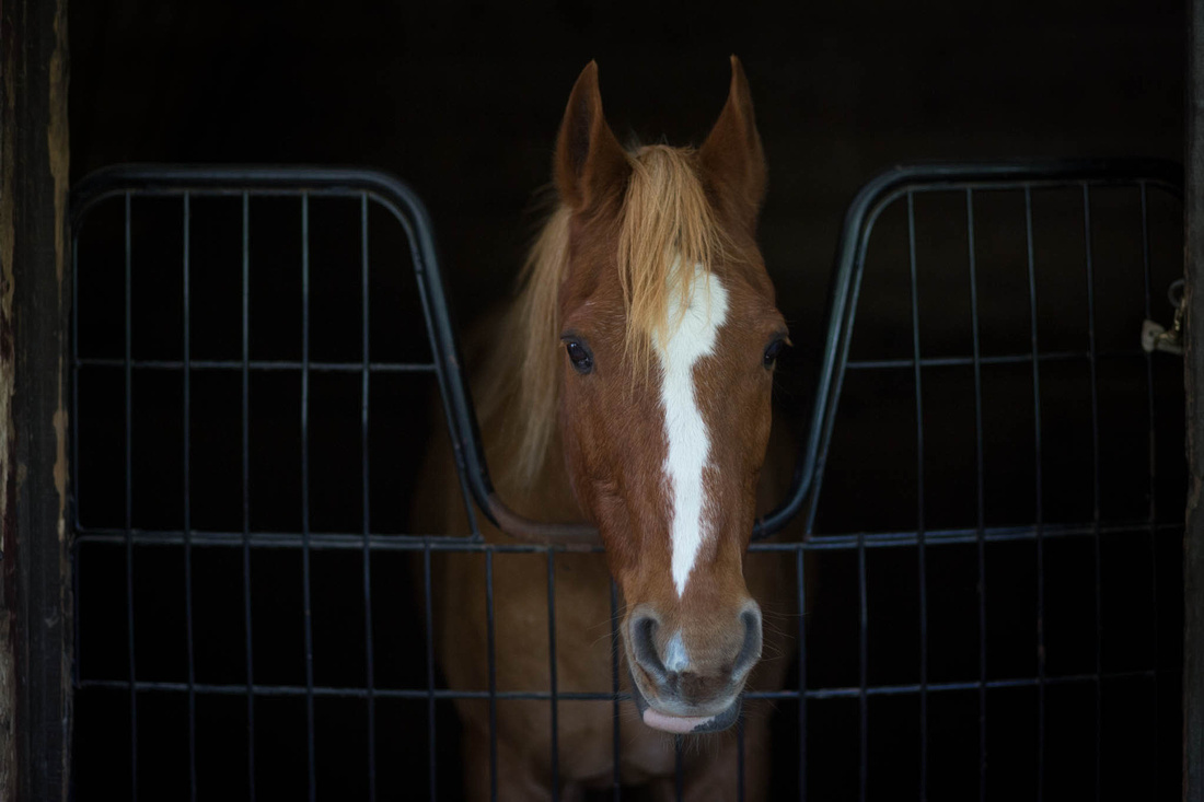 Tucker in his stall.